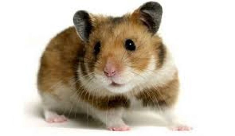 Lingkungan yang kotor, sampah makanan yang meningkat dan tidak tertata merupakan beberapa faktor penyebab berkembangnya tikus khususnya didaerah Bekasi. Tikus memiliki ancaman penyakit berbahaya seperti Leptirosis, maka dengan adanya pengendalian tikus dan beberapa hewan pengerat lainnya dapat menjaga pula lingkungan dan masyarakat dari ancaman penyakit tersebut.