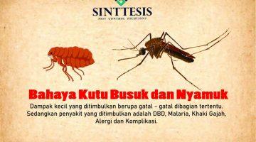 Bahaya Kutu Busuk dan Nyamuk
