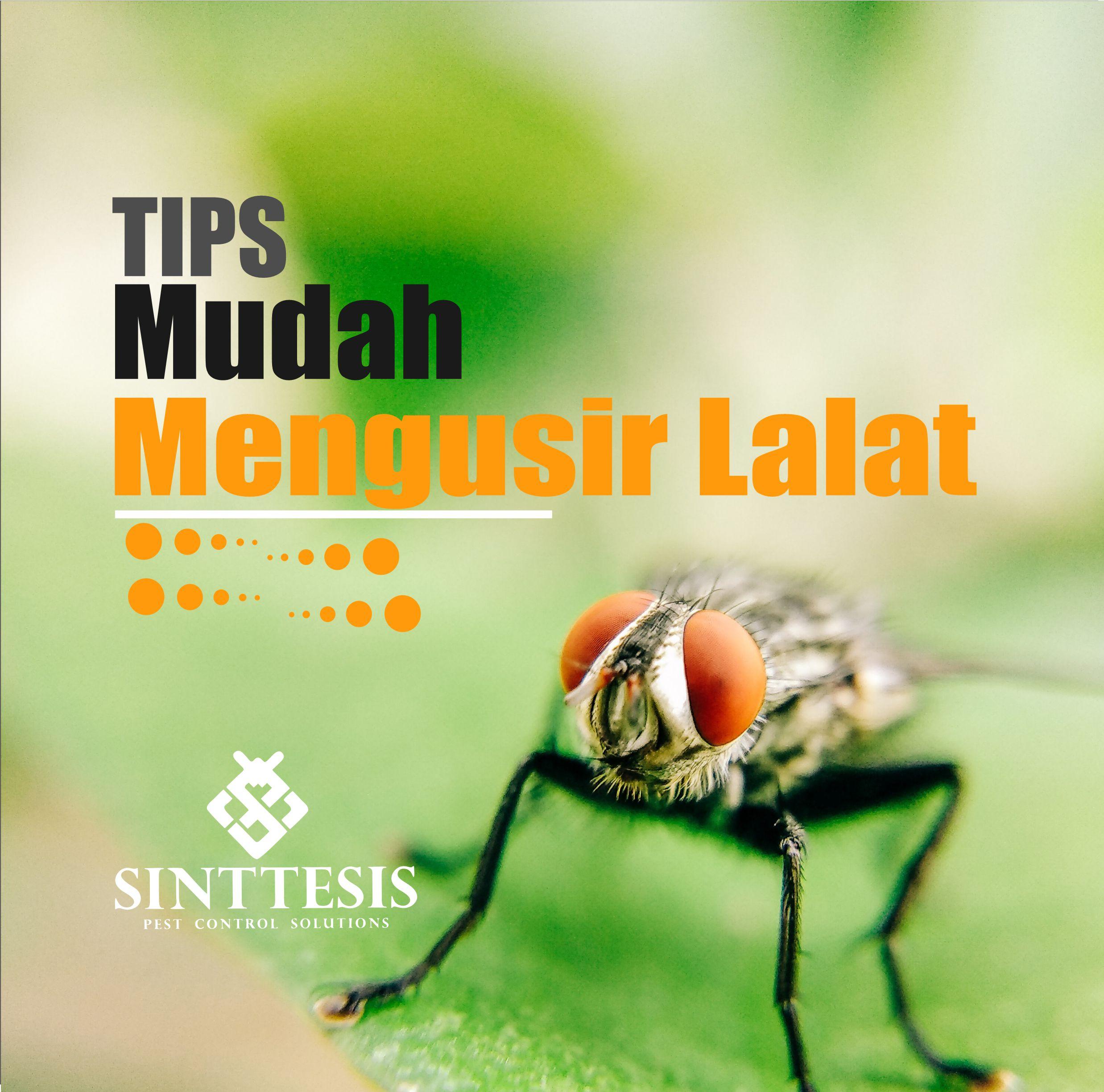 Tips Membasmi Lalat Secara Cepat Praktis dan Mudah