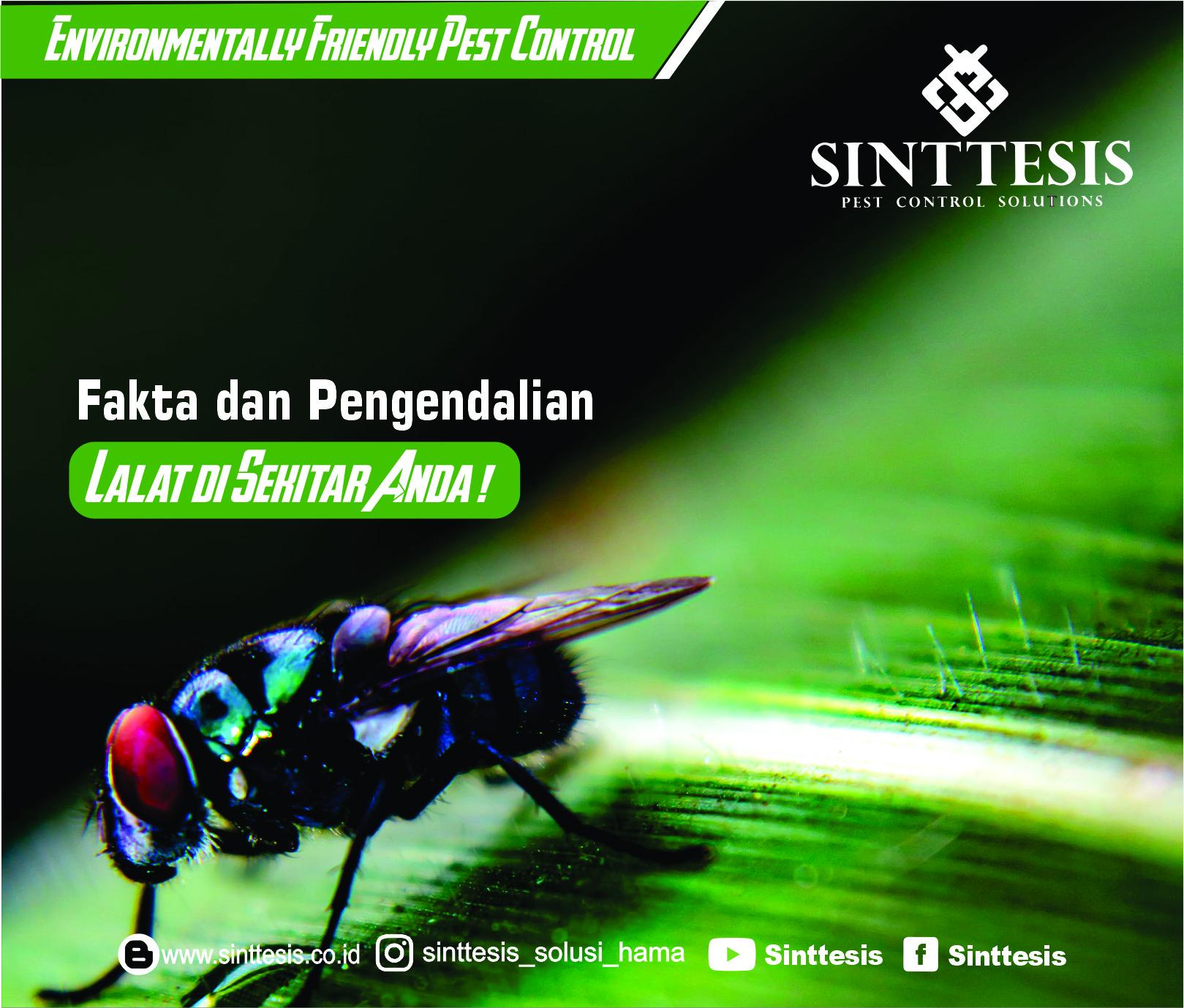 Fakta dan Pengendalian Lalat