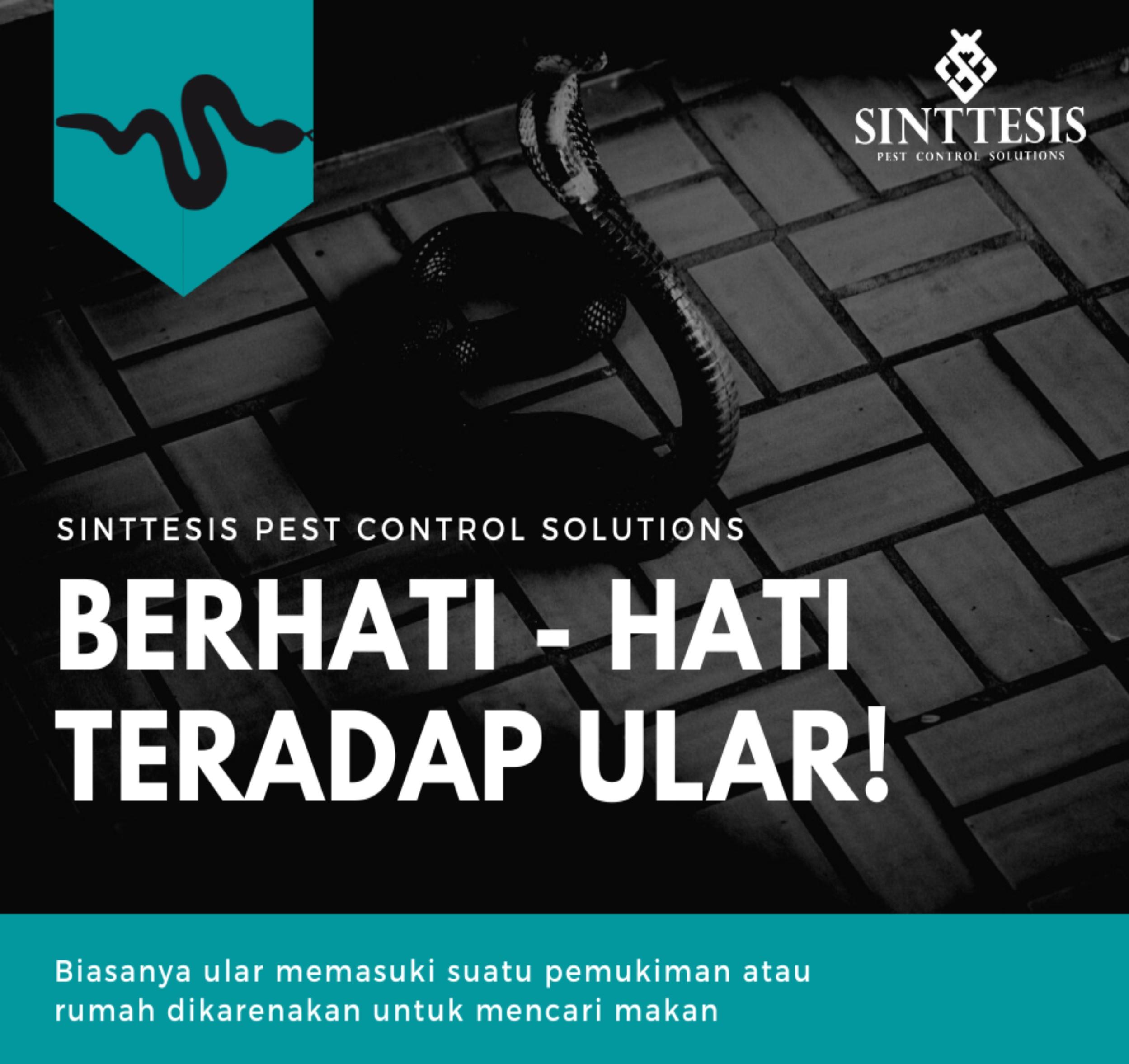 Jasa Pengusir Ular di Bogor dan Jakarta