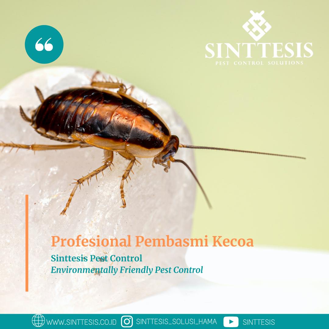 Profesional Pembasmi Kecoa